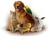 Товары для животных и птиц
