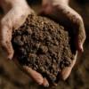 Как выбрать качественный  плодородный грунт?