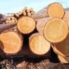Преимущества древесины в строительстве